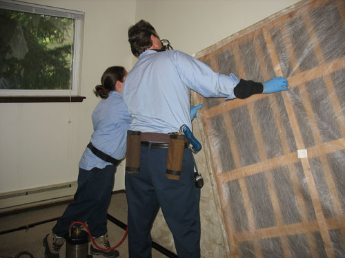 Affordable Bed Bug Inspection Services